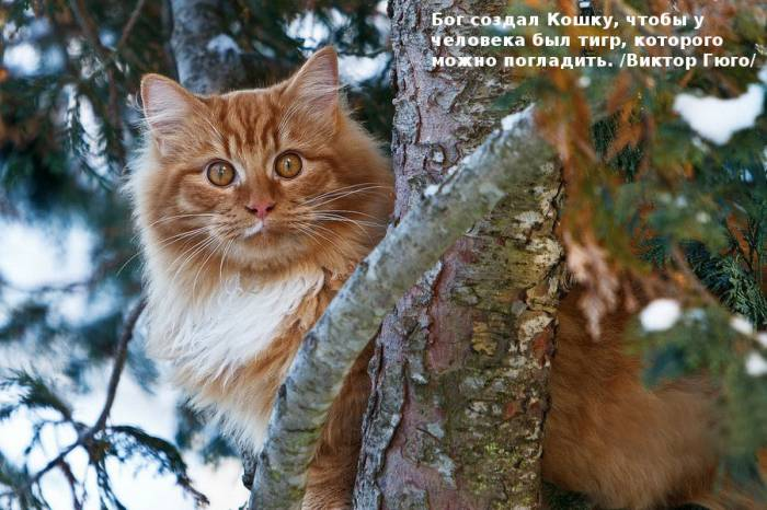 Цитаты знаменитостей о кошках (30 фото)