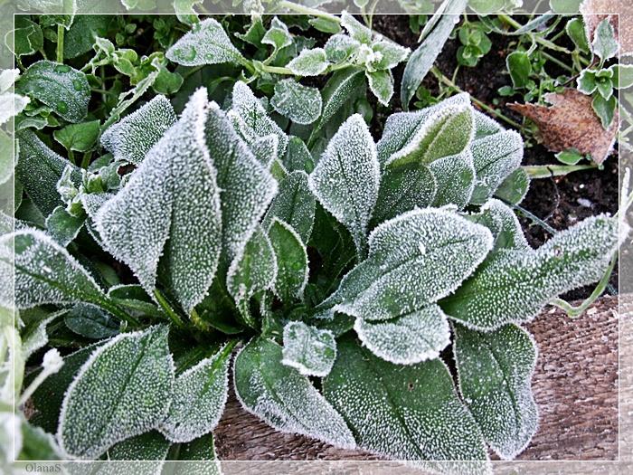 Первая помощь рассаде после заморозков