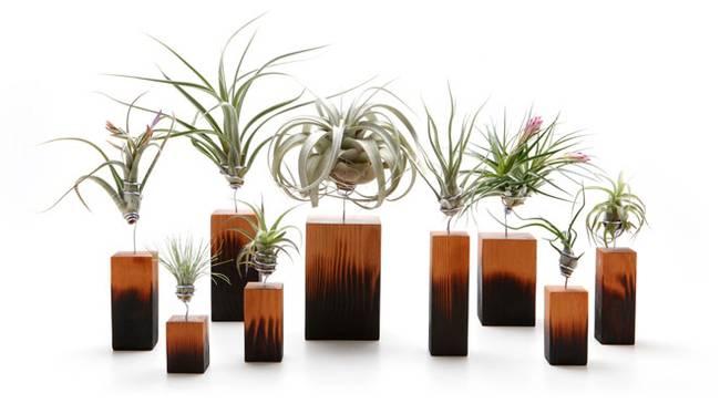 Живая стена из растений: вазы разных форм