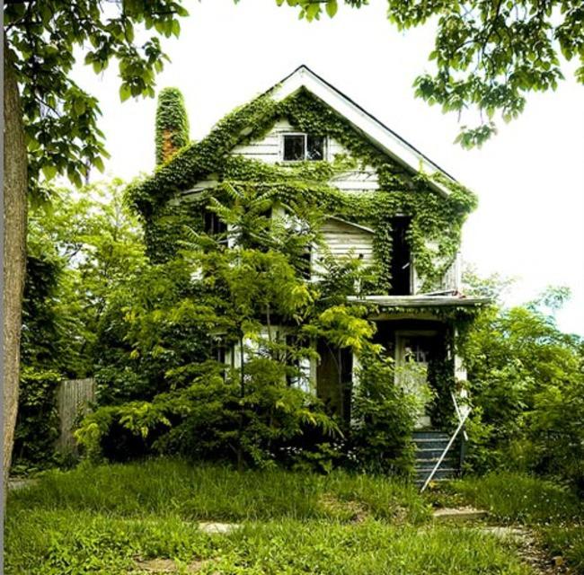 Заросший заброшенный дом заброшенное, природа, разрушение, цивилизация