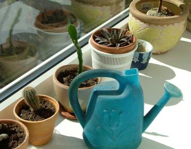 plants1215-15.jpg