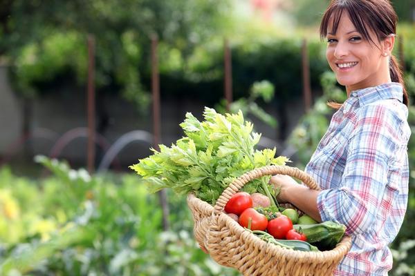 Сезонные работы в саду и огороде: заканчивается третья неделя июля