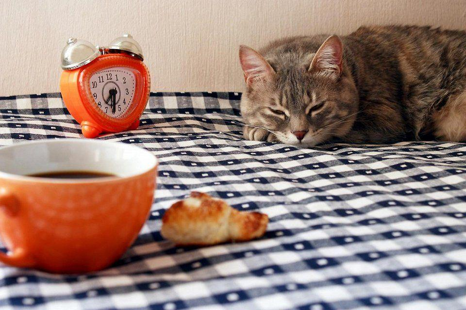 catcafe02 Самые необычные «кошачьи» кафе из разных стран мира