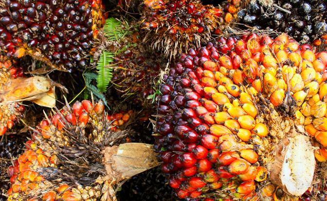 В Европе из пальмового масла делают топливо, а россиян заставляют есть