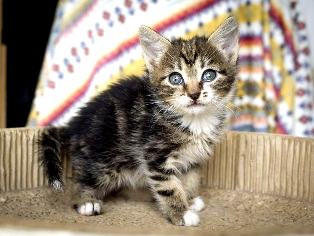 Пятничный котенок Мышкин – в…