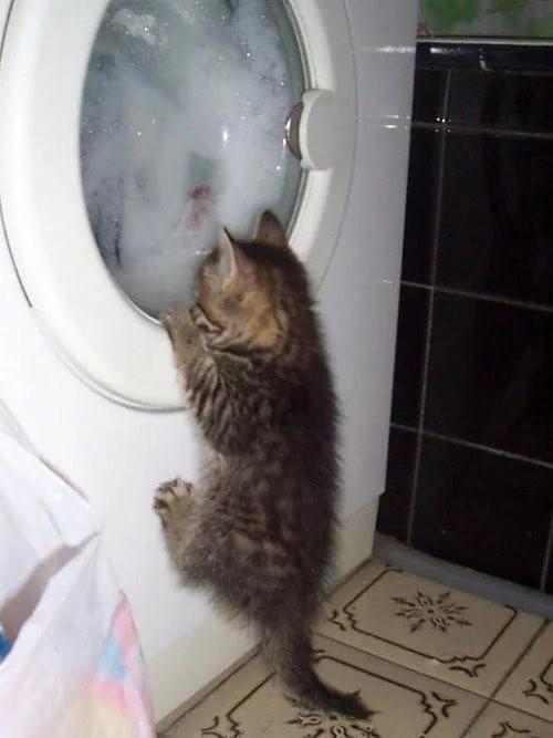 А что там? животные, коты, прикол