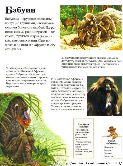 Уникальный и неповторимый мир животных с журналом звери