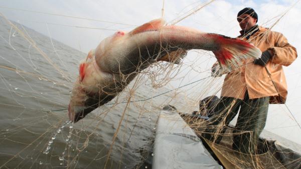 на что ловить рыбу на заливе волге