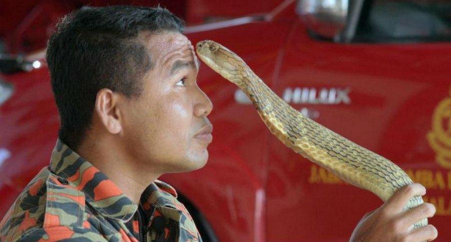 Абу Зарин Хуссин: знаменитый укротитель змей умер от укуса кобры