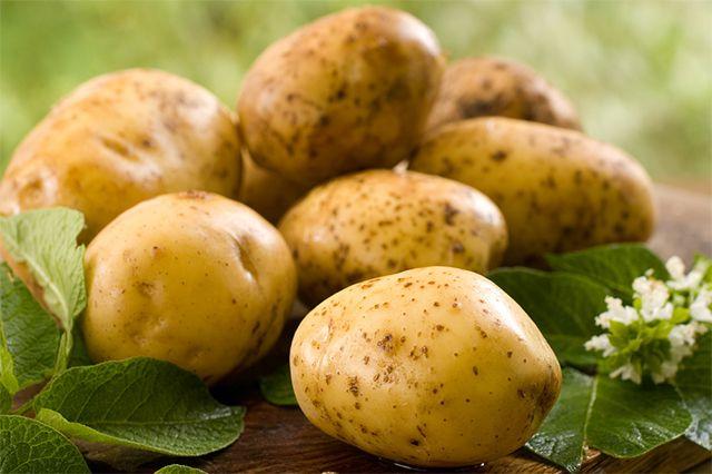 Урожай картофеля: когда копать и как хранить