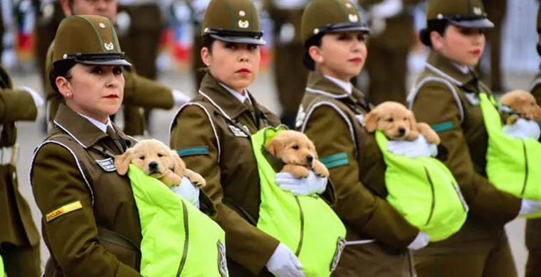 Самый милый военный парад прошел в Чили