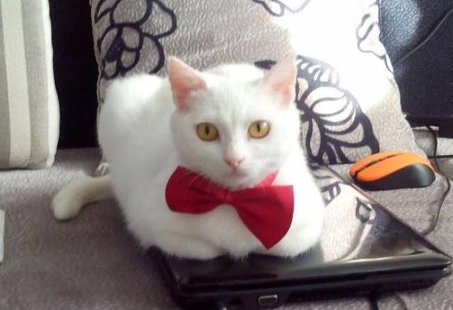 Мистический случай: кошка из приюта спасла хозяйке жизнь