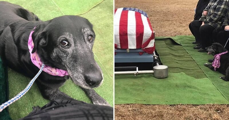 Собака доказала хозяину свою любовь до гроба