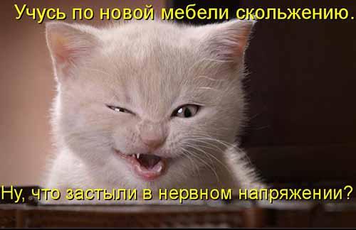 Подборка котоматриц для хоро…