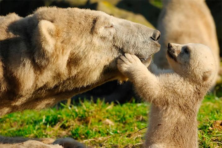 Материнская нежность и забота в животном мире