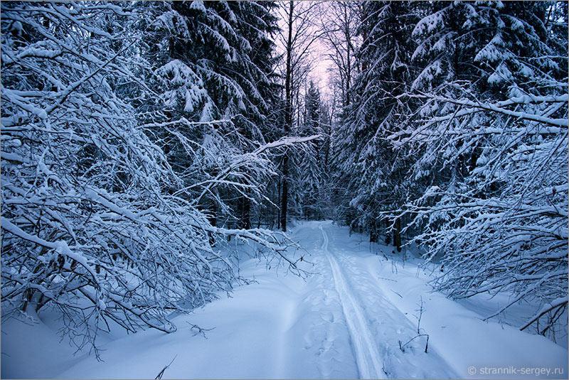 Очаровательные картинки зимы