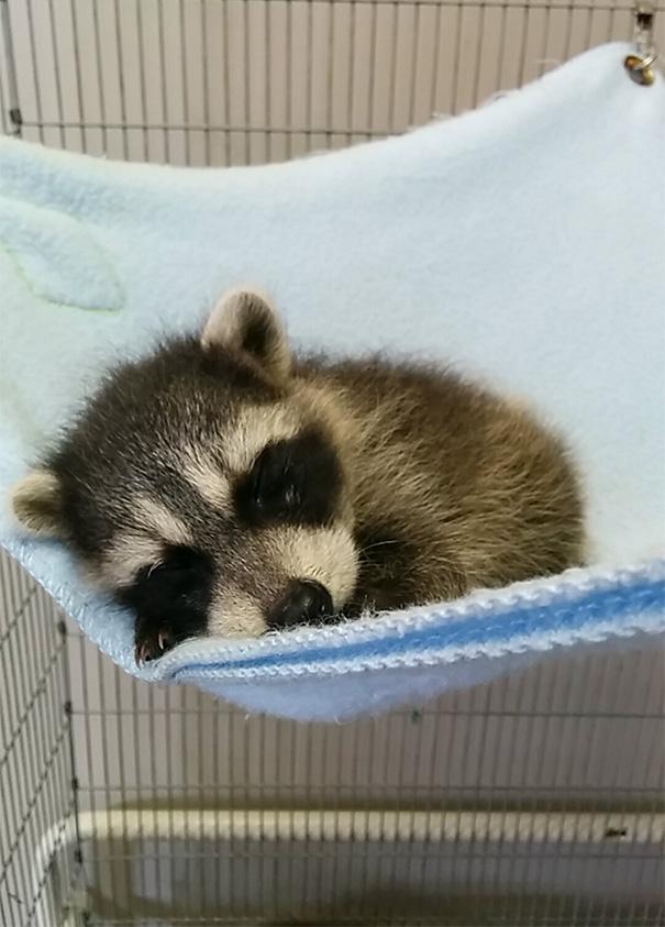 cutest-baby-animals-58__605