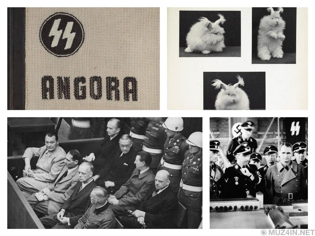"""Проект """"Ангора"""": Тайное разведение ангорских кроликов в концентрационных лагерях"""
