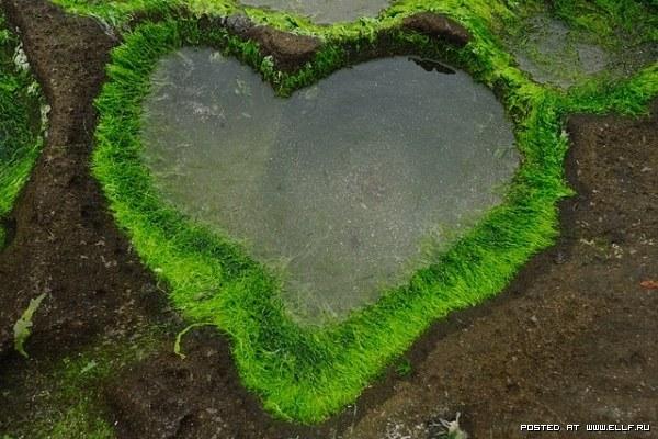 Природа признается нам в любви (20 фото)