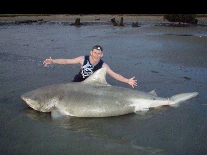 11. Акула, пойманная в реке Миссисипи. животные, природа