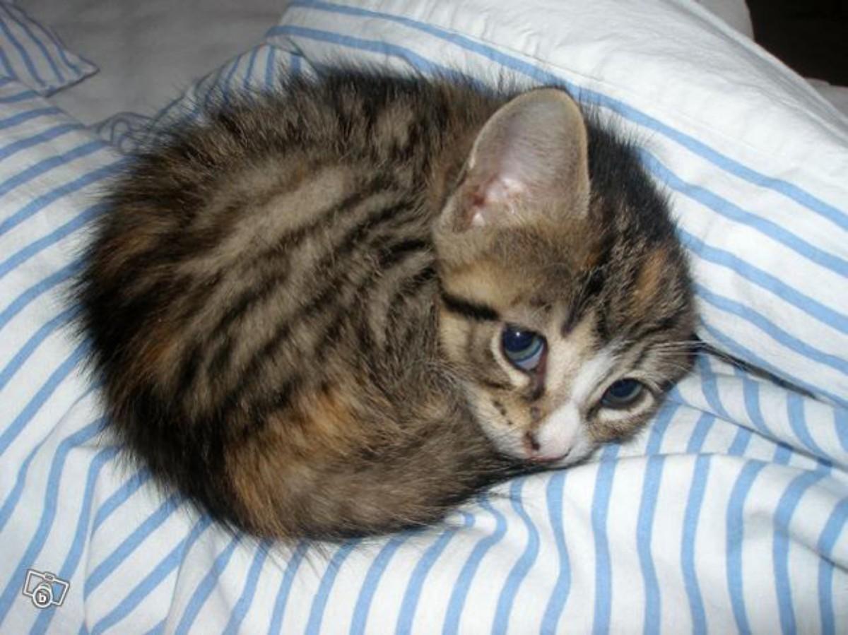 lolcats69 100 лучших фотографий кошек всех времен и народов