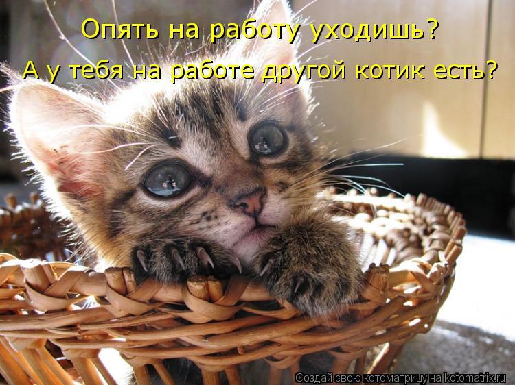 Котоматрица: Опять на работу уходишь? А у тебя на работе другой котик есть?