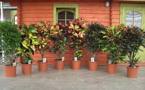 Зимовка горшечных растений