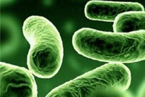 Уникальная бактерия станет новым средством от ожирения