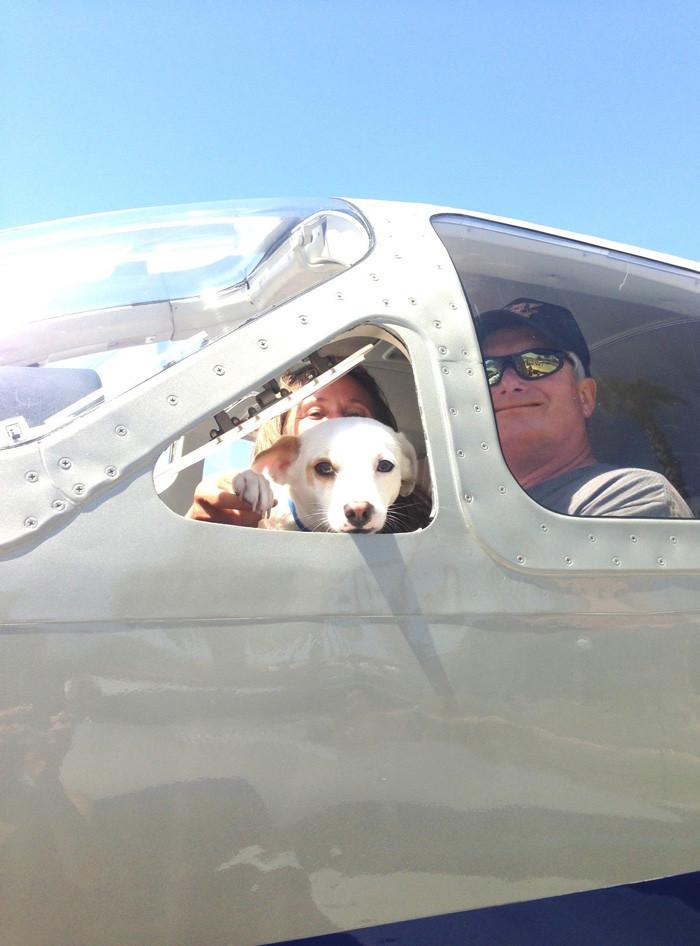 Пилоты спасают собак от эвтаназии