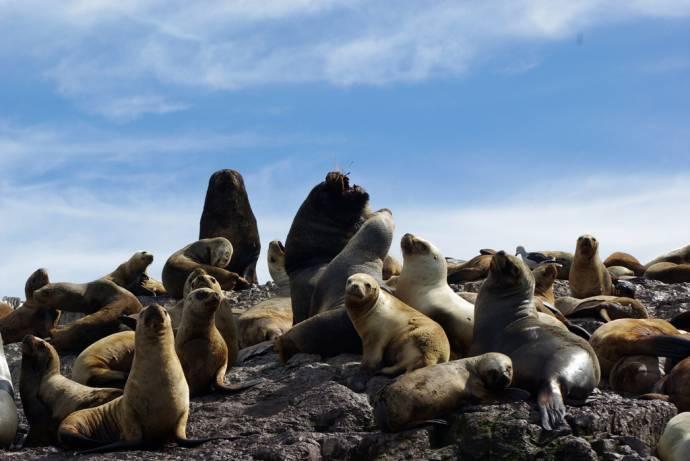 Тюленье племя земли и моря