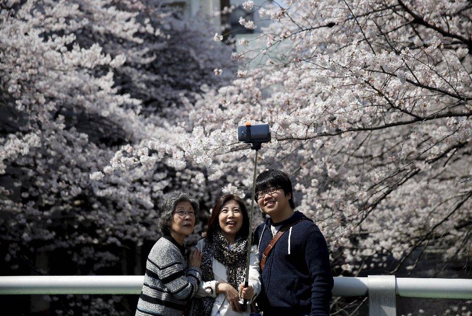 традиция любования цветущей сакурой-9