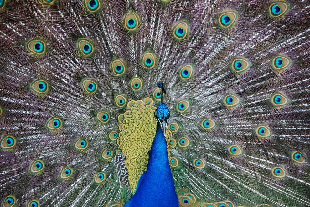 Топ-10 самых красивых птиц планеты