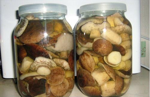 Как посолить грибы с