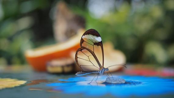 Грета Ото - стеклянная бабочка (15 фото)