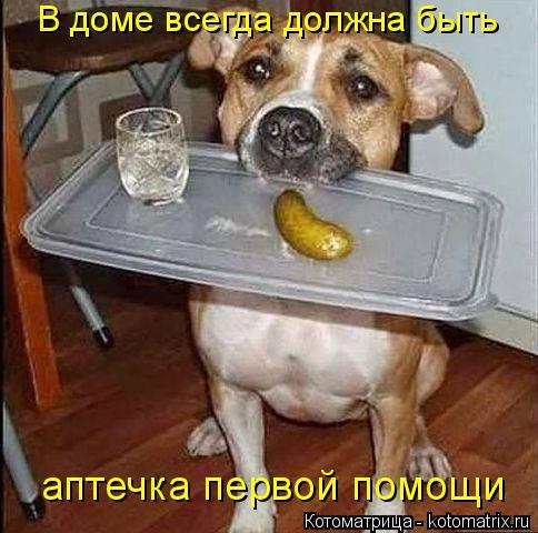 Котоматрица: В доме всегда должна быть аптечка первой помощи