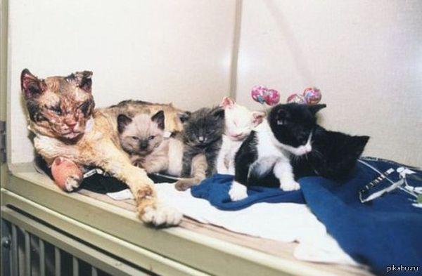 Кошка заходила в горящий дом 5 раз, чтобы вынести каждого своего малыша.   кот, пожар, малыши, спасение, минус 5 жизней у кошки