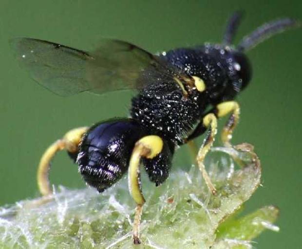 5 полезных насекомых на вашем садовом участке