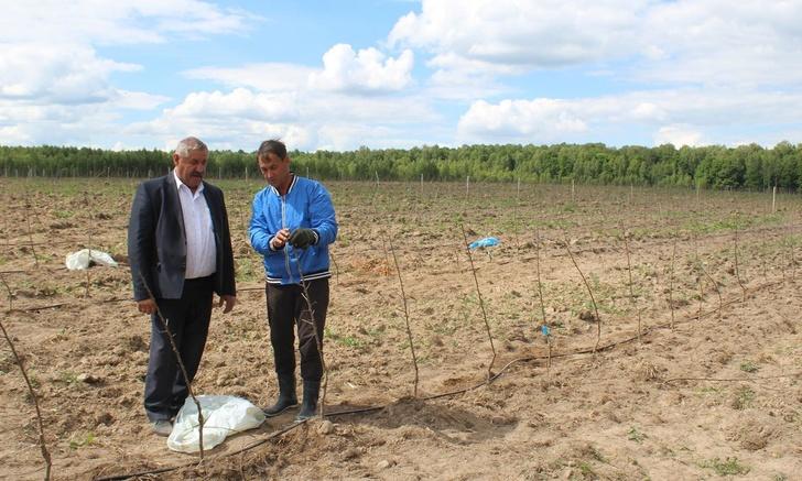 Российско-сербское предприятие ООО «Брянский сад» заложило в Брянской области новый яблоневый сад