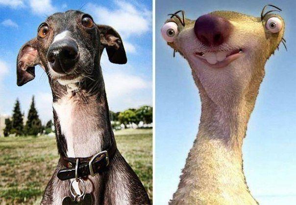 Собаки, похожие на кого угодно, только не на собак весело, смешно, собаки, юмор