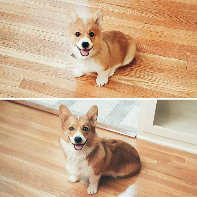 Как быстро взрослеют собаки (21 фото)