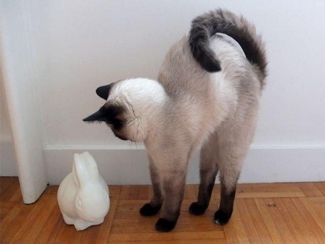 Животные - забавные и смешные