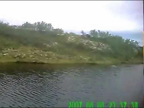 Кумжа Кольского полуострова