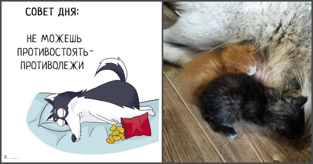 «Хаски — это ты!» 100% юмора, где каждый узнает свою жизнь. + История о настоящем хаски и котятах!