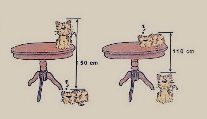 Коты и стол: заковыристая за…