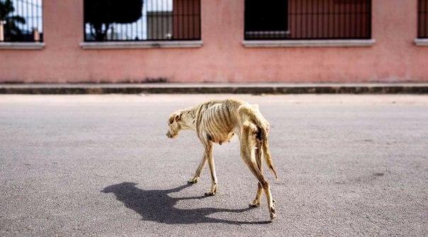 Собаку по прозвищу Луна, умирающую от голода, спасли люди с добрым и отзывчивым сердцем.....