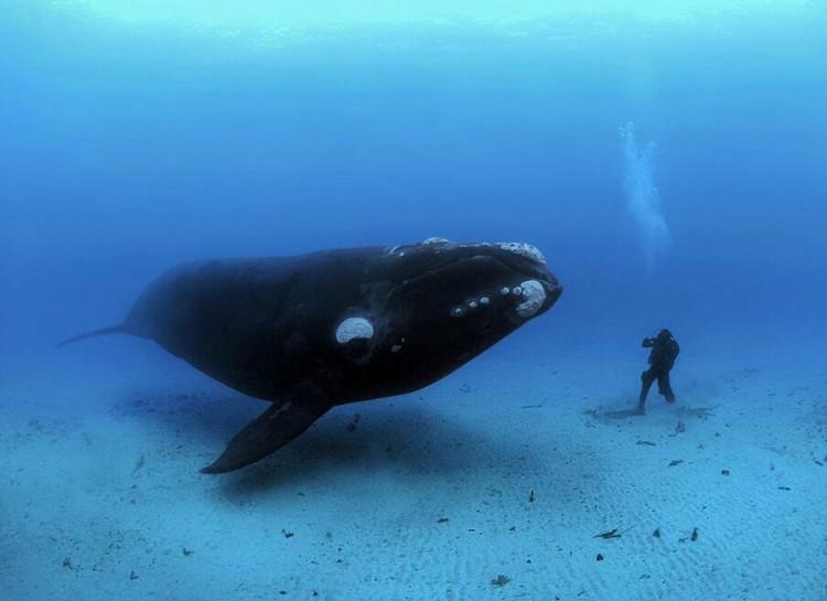 Фото, после которых вам будет страшно заходить в воду