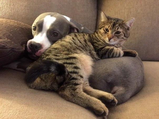 10 котов, которые по уши втрескались в собак