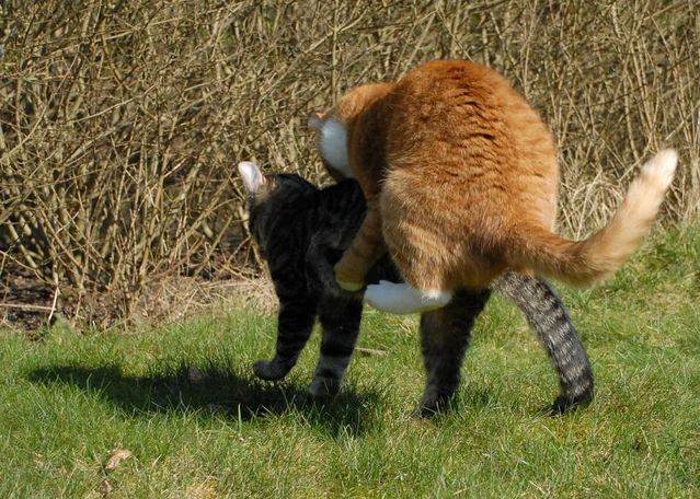 cat_flying_fight_07
