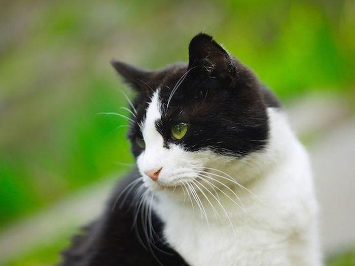 Самые важные вопросы о кошках и ответы на них