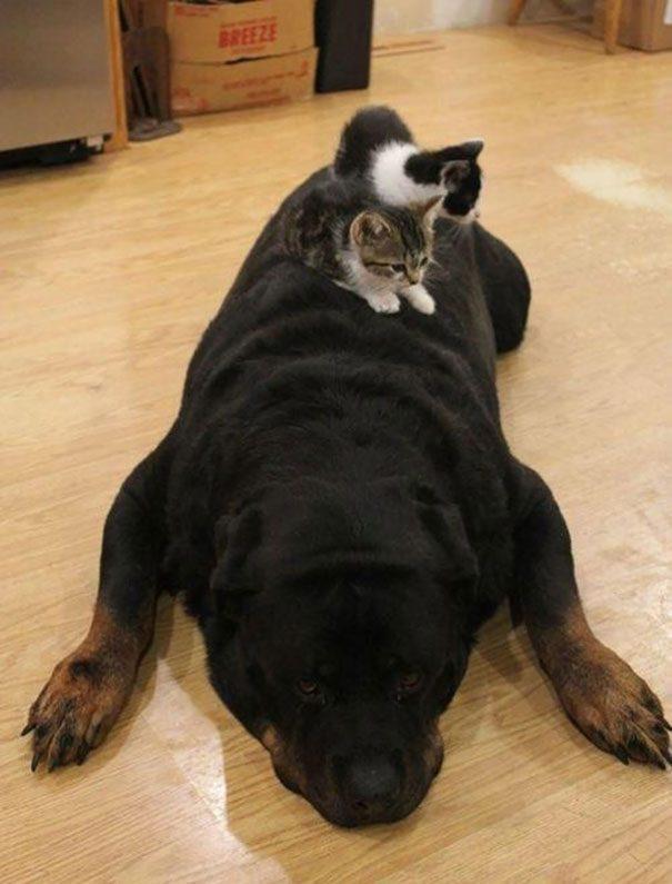 Просьба не шевелиться.  Фото наглых кошек